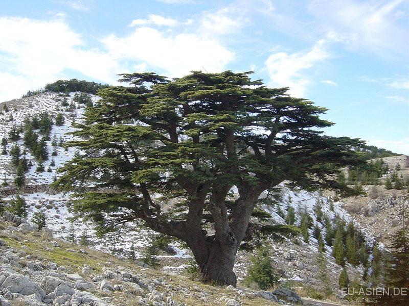 Libanon: Nützliche Infos :.: EU-ASIEN.DE